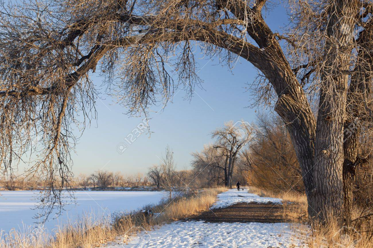 a natural area trail along frozen lake framed by large cottonwood trees, winter scenery with distant person walking dogs, Fort Collins, Colorado Stock Photo - 8908184