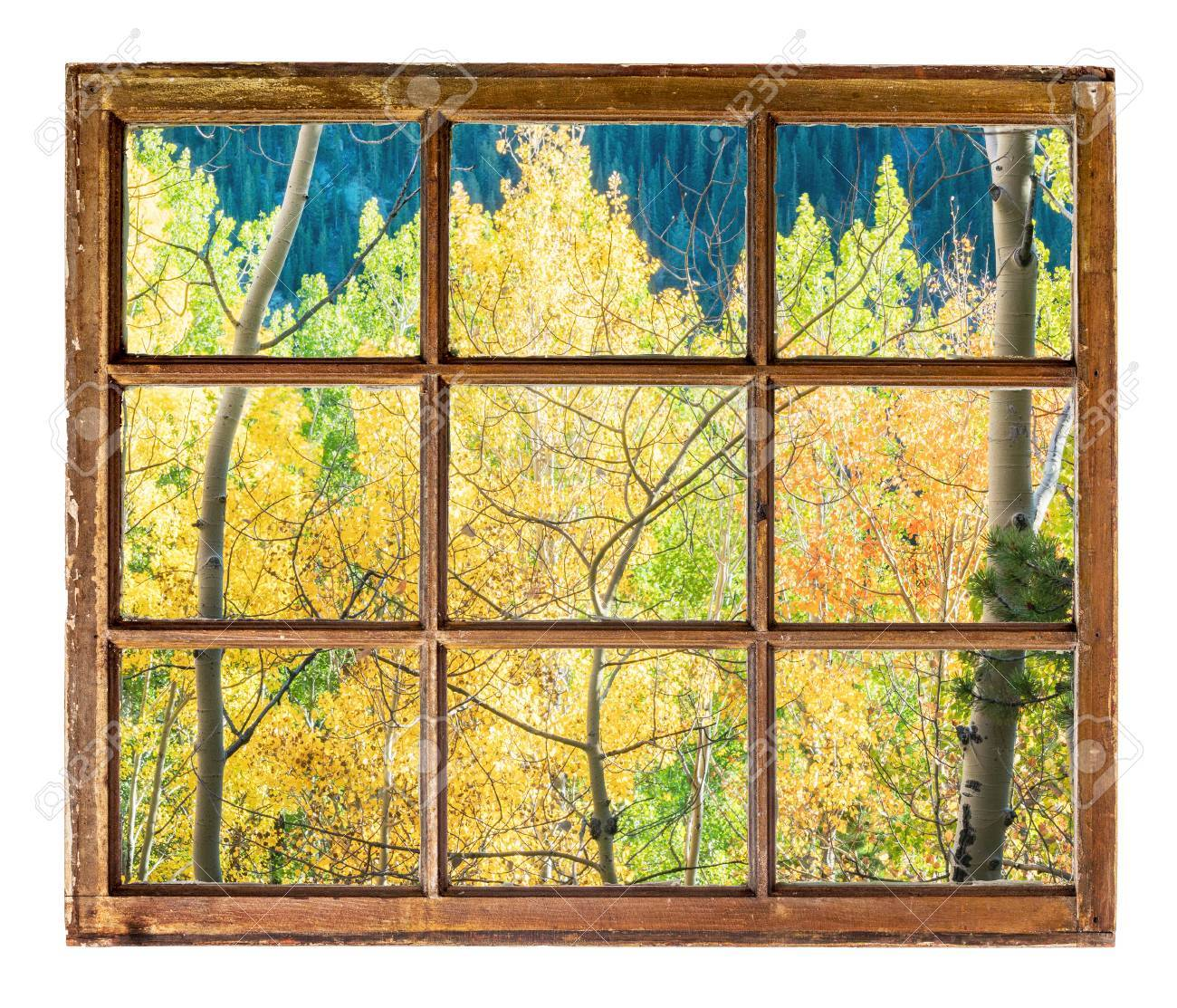 Colorado Aspen Tree In Fall Colors As Seen From A Sash Window ...