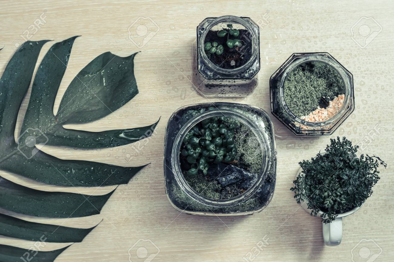 Moss Terrarium Plants And Green Leaf On Wooden Background Stock