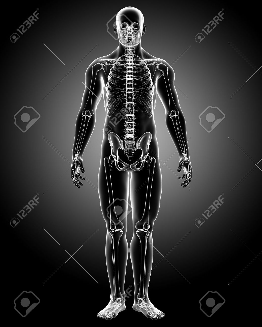 3d rendered medical x-ray illustration of male body X-ray anatomy Stock Photo - 13757470