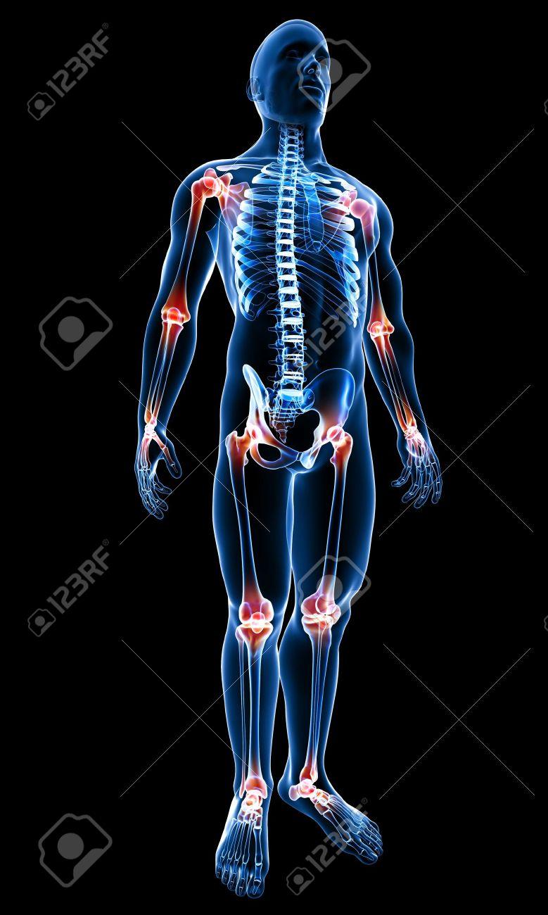 3d Rindió La Médica De Rayos X Ilustración De La Anatomía Del Cuerpo ...