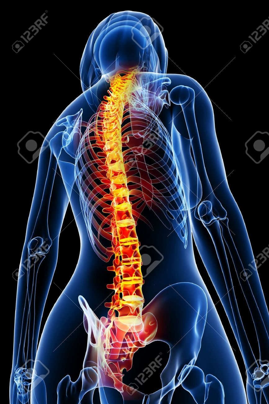 3d Rendered Medical X Ray Illustration Of Female Spine Anatomy Stock