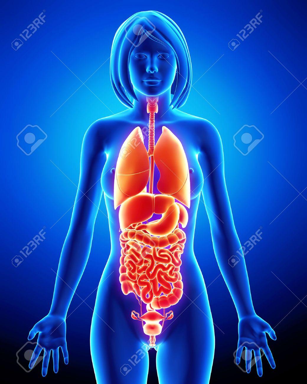Медицина женские органы