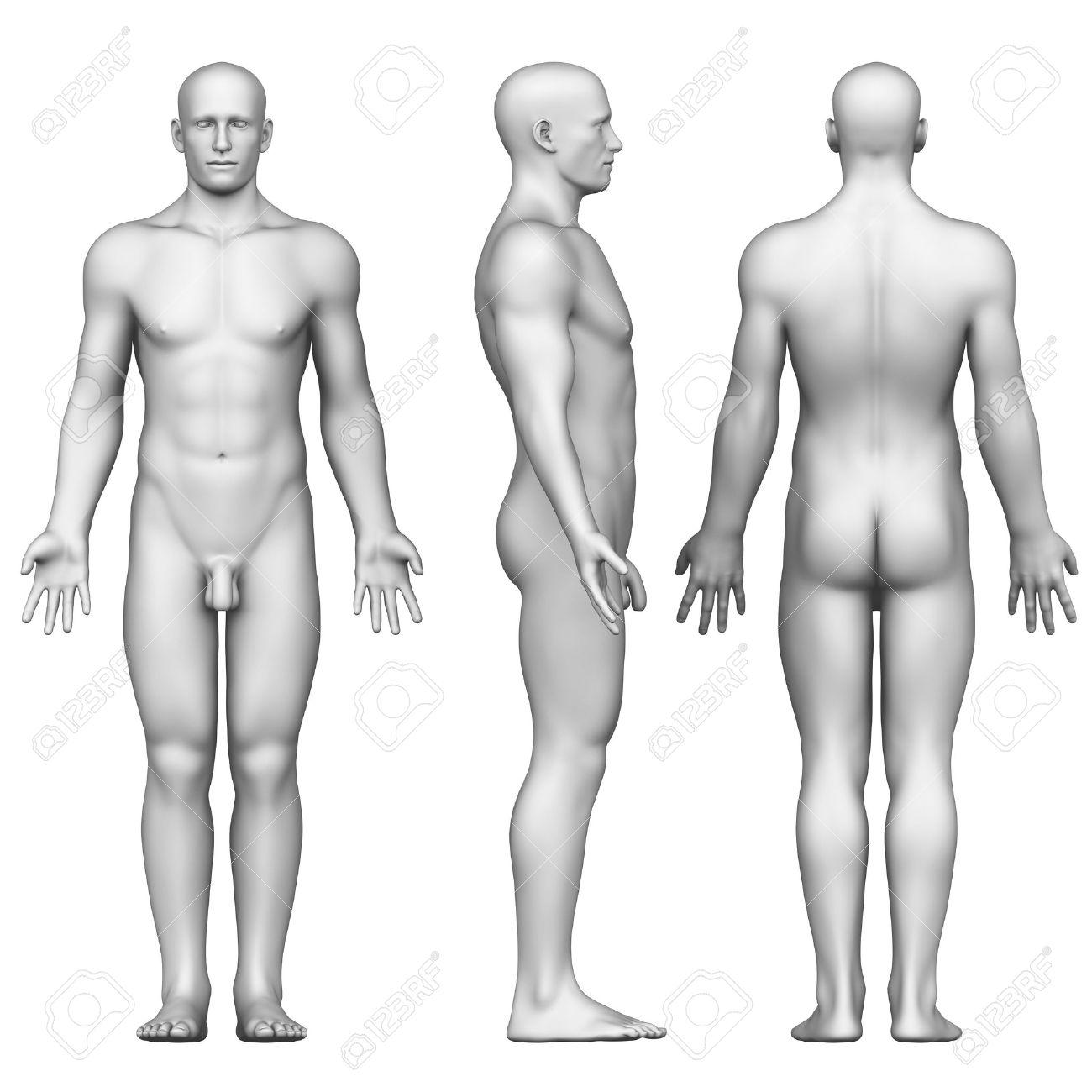 Figura Masculina En Posición Anatómica Posterior, Frontal, Vista ...