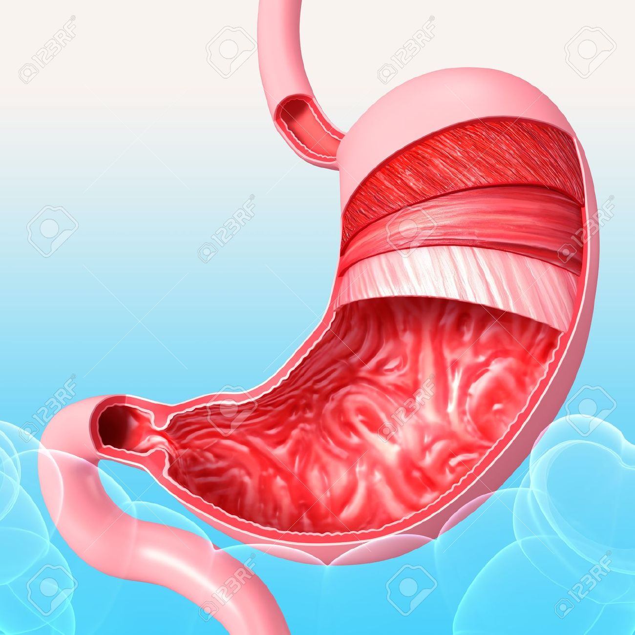 Anatomy Of Human Stomach In Blue Background Stock Photo Picture And
