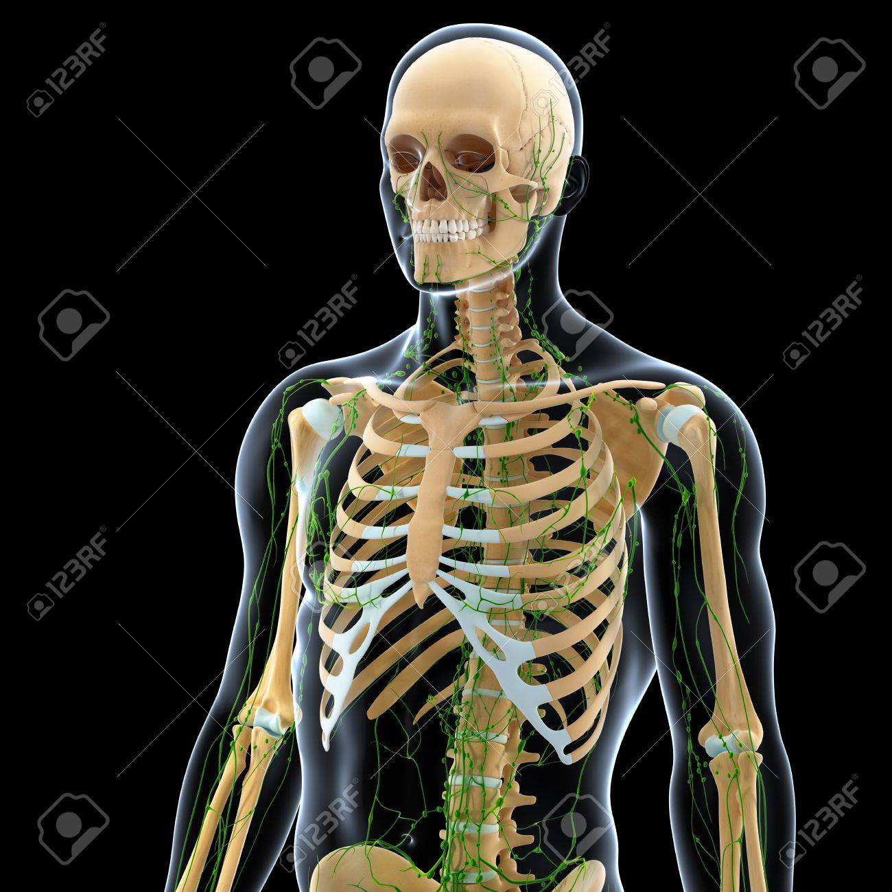 3d art illustration of  lymphatic system of male in black Stock Photo - 14772051