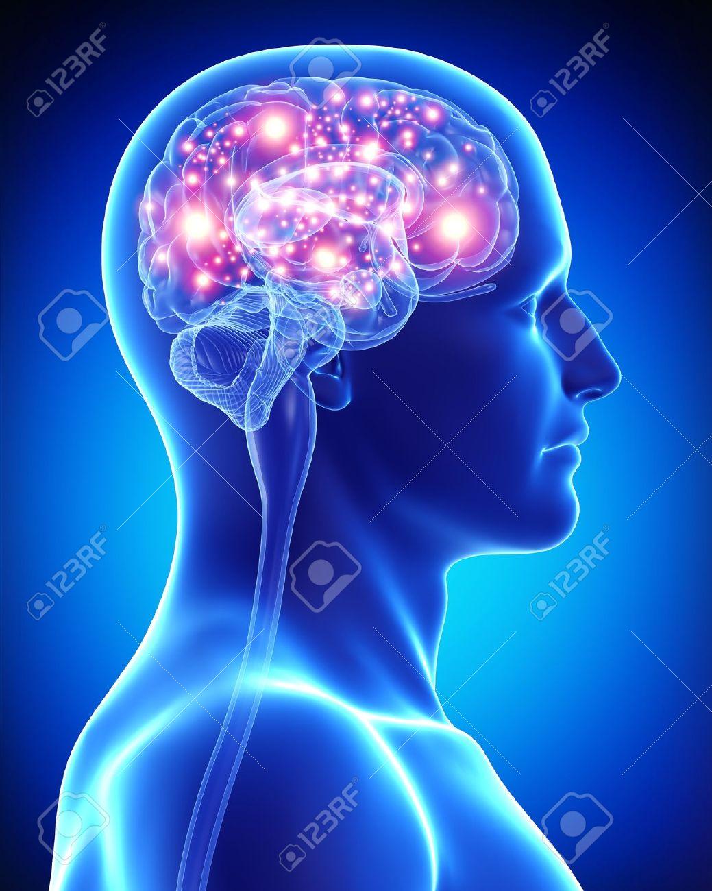 female active brain - 15181696