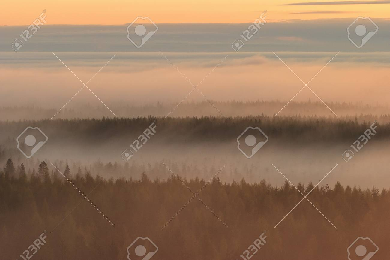 Morning mist in a forest Stock Photo - 17292456