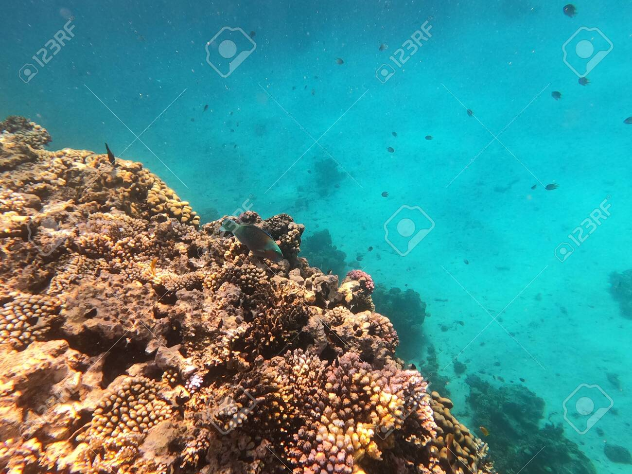 Reef with lots of colorful corals and lots of fish in clear blue water in the Red Sea near Hurgharda, Egypt - 153126114