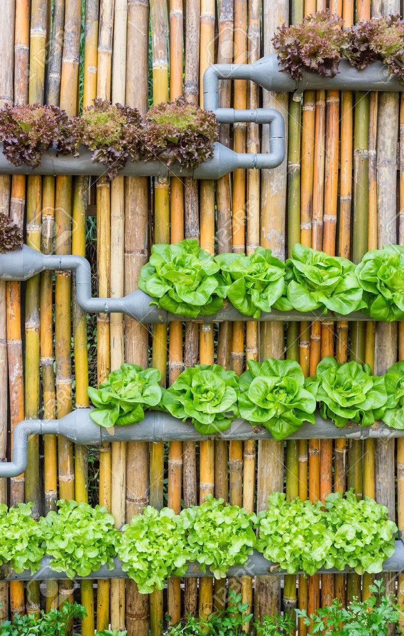 Organisch Hydrokultur Gemüse Vertikale Garten Lizenzfreie Fotos