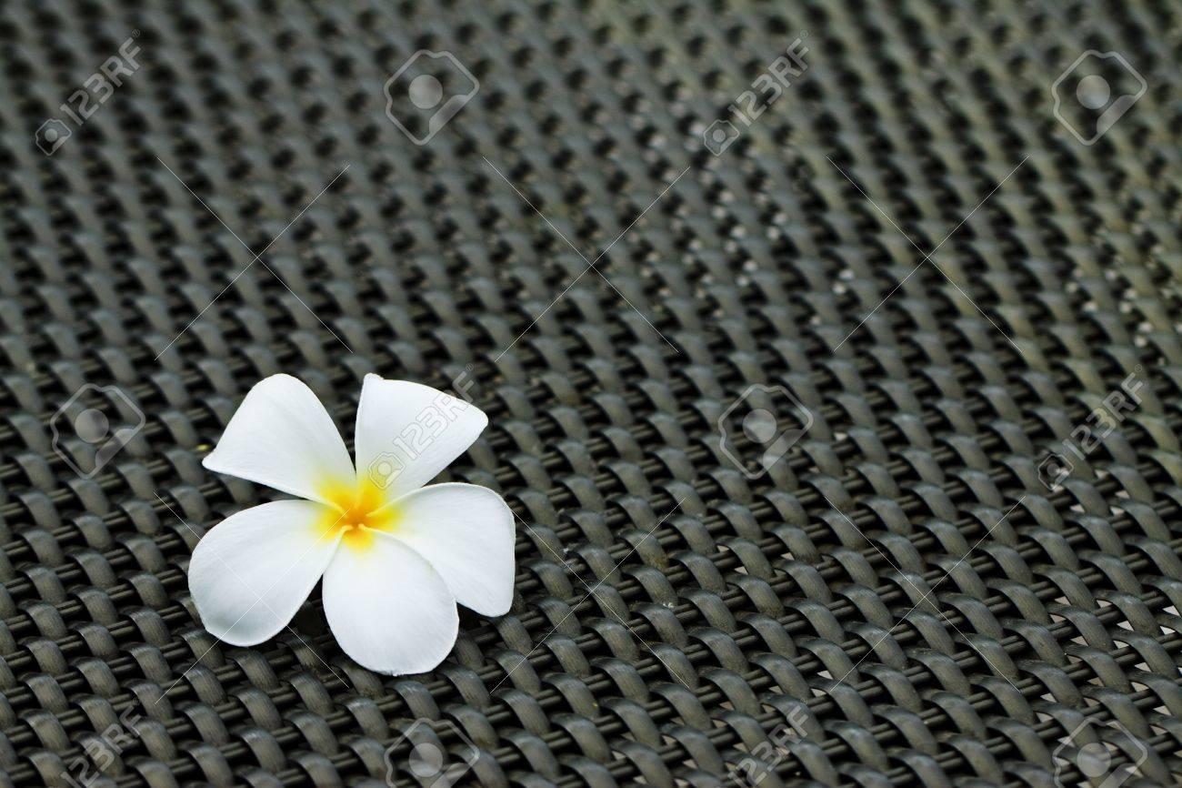 Plumeria alba flowers on black table Stock Photo - 7902712