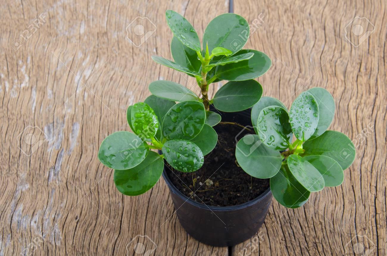 Pot Plante En Bois jeune plante en pot noir placé sur un plancher en bois et fond blanc.