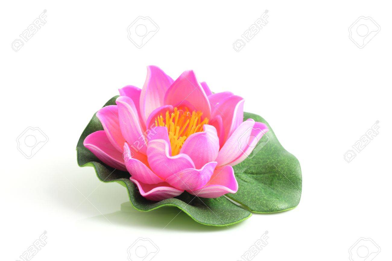 Yoga pattern background seamless pattern with five petals lotus flower - Lotus Natural Pink Lotus Isolated In White Background Stock Photo