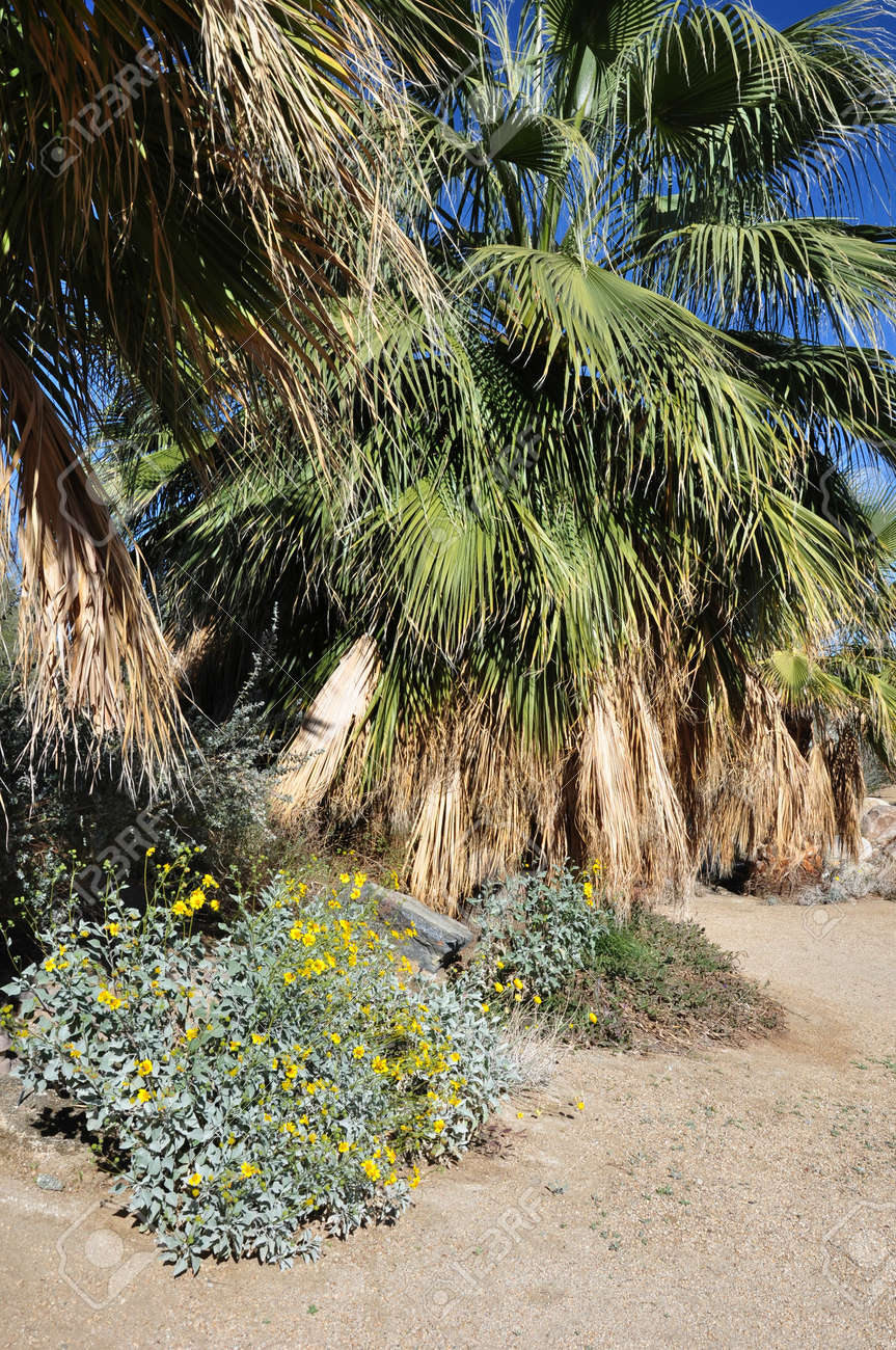 A Fan Palm Tree And Flowers Creat An Oasis In The Desert Near