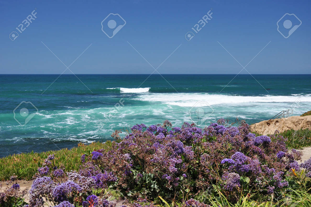 Purple Flowers Grow Along The Coast Of La Jolla Near San Diego California Stock Photo