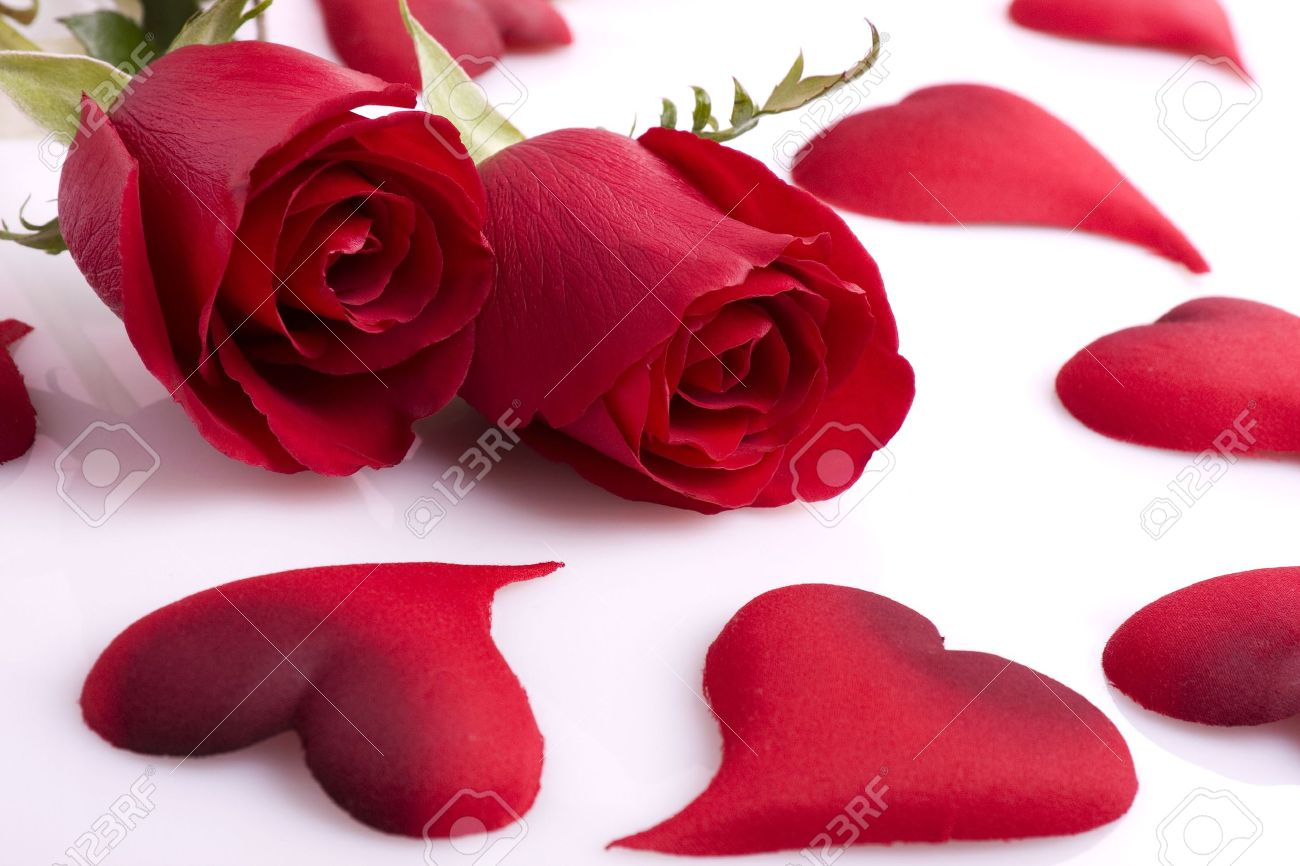 Two beautiful red roses with hearts on a white background stock stock photo two beautiful red roses with hearts on a white background izmirmasajfo