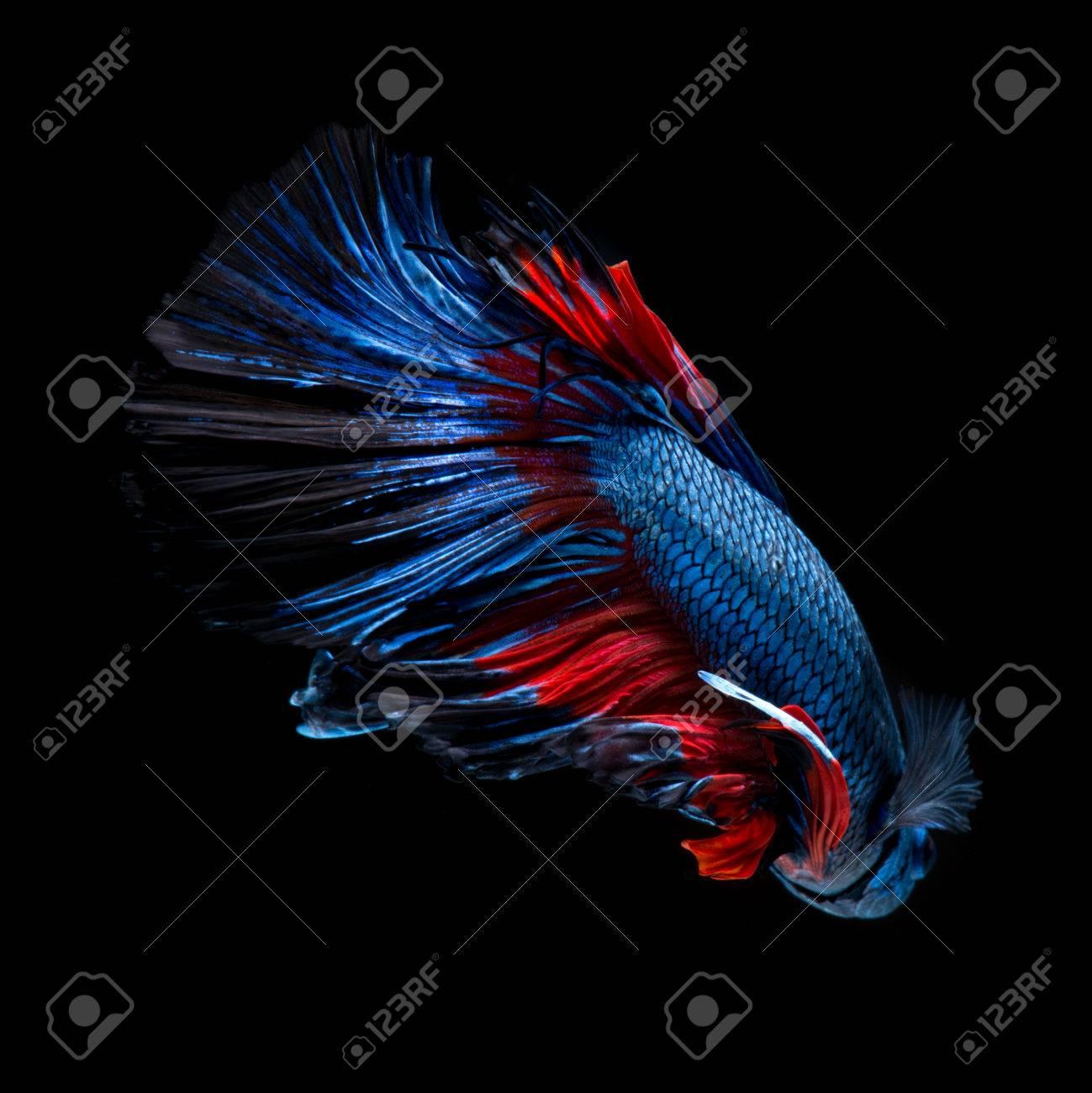Excepcional Pez Azul Peces Rojos Para Colorear Colección - Dibujos ...