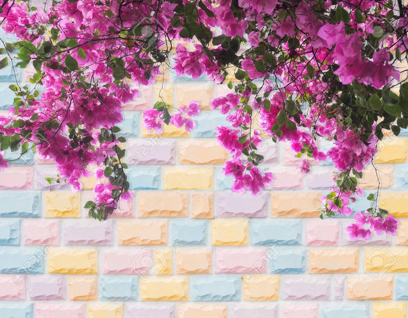 fleur bougainvillier rose sur pastel coloré mur de briques de fond