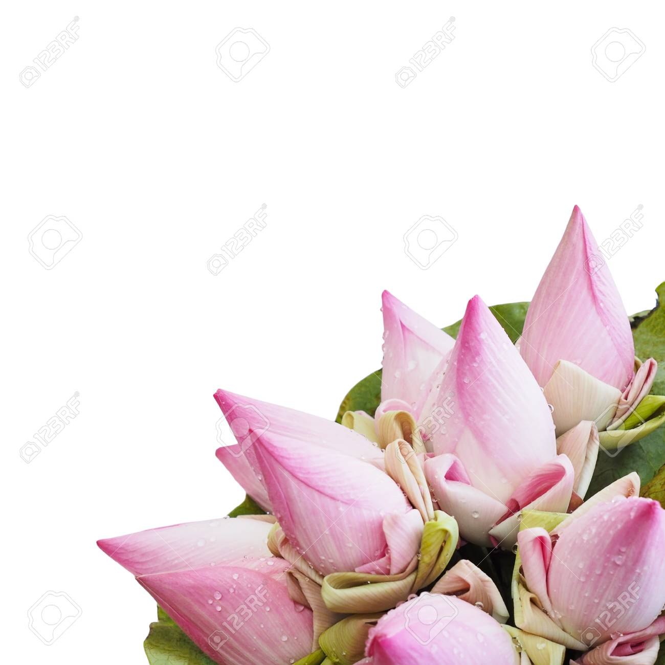 Close Up Pink Lotus Flower Bouquet With Leaf Thai Culture Style