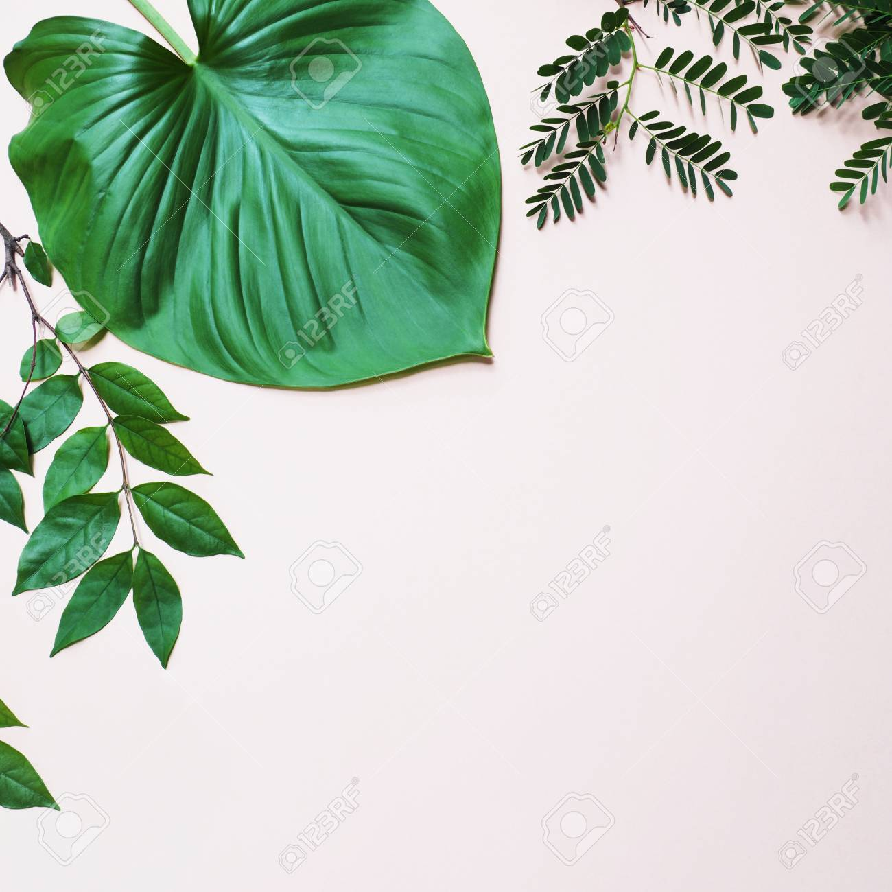 Tropical Green Leaves Plant On Pastel Pink Background With Copy Stock Photo Picture And Royalty Free Image Image 104896501