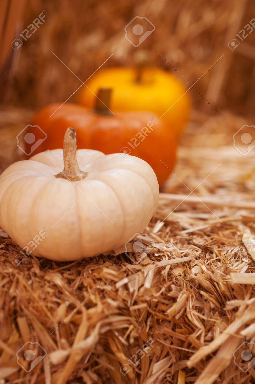 closeup of a group of harvested pumpkins Stock Photo - 15817272