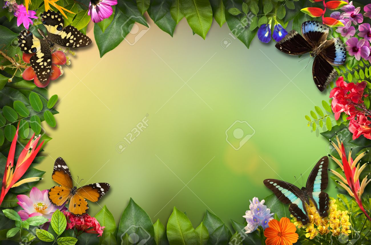 Butterfly And Flower Borders Designs Tosmun