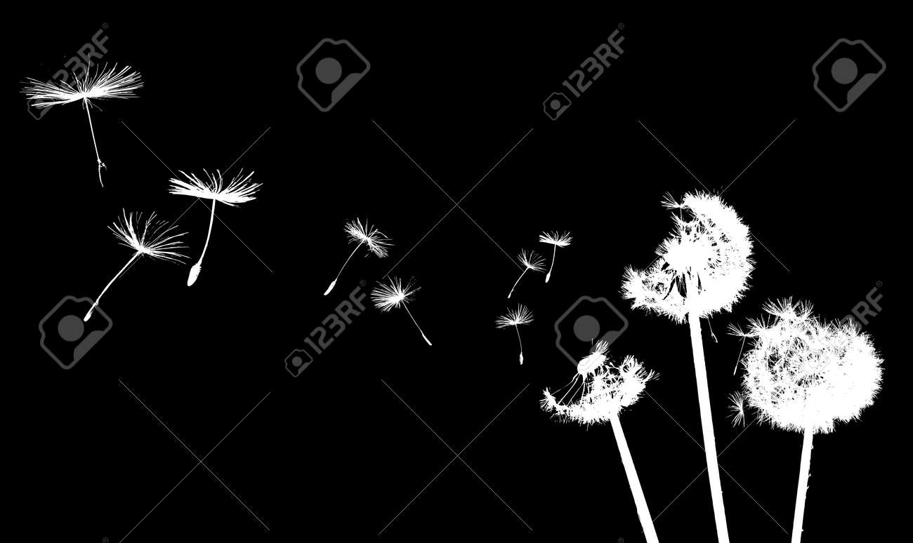 A Dandelion blowing Stock Photo - 3819411