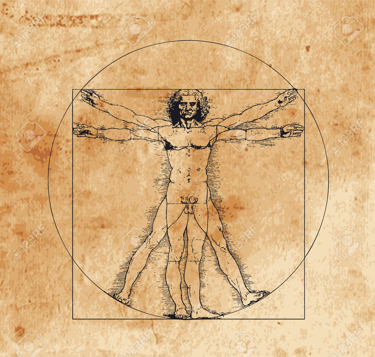 A highly stylized drawing of vitruvian man with crosshatching and sepia tones - 3958227