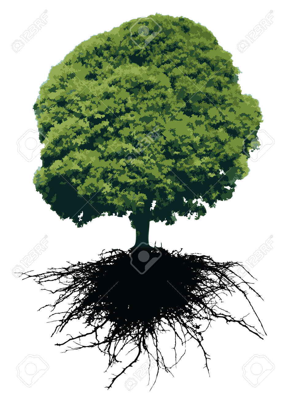 Trees with roots - 8606370
