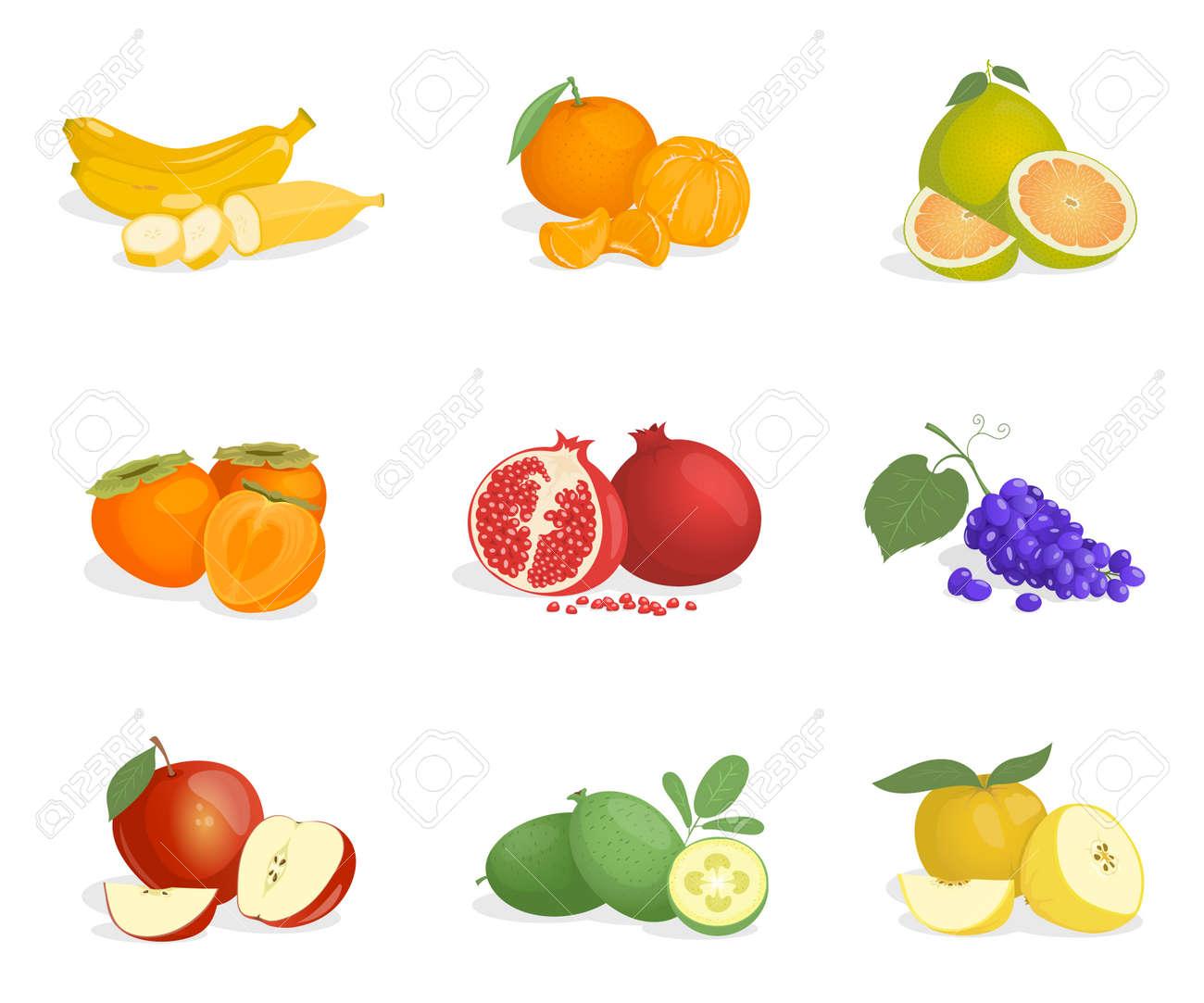 Banana, orange, guava, persimmon, pomegranate, grape, apple, pomelo, and feijoa vector cartoon illustrations. - 172122877