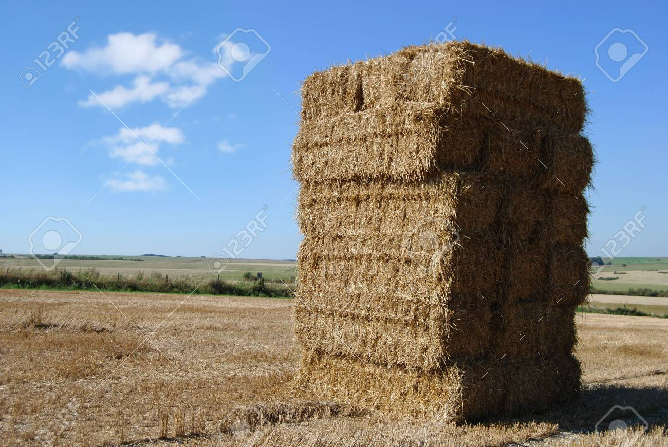 Haystack leaning in a field Stock Photo - 2444636