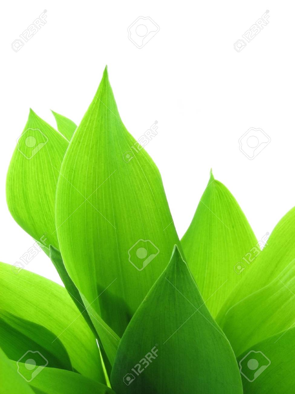 Fresh green grass Stock Photo - 5754154