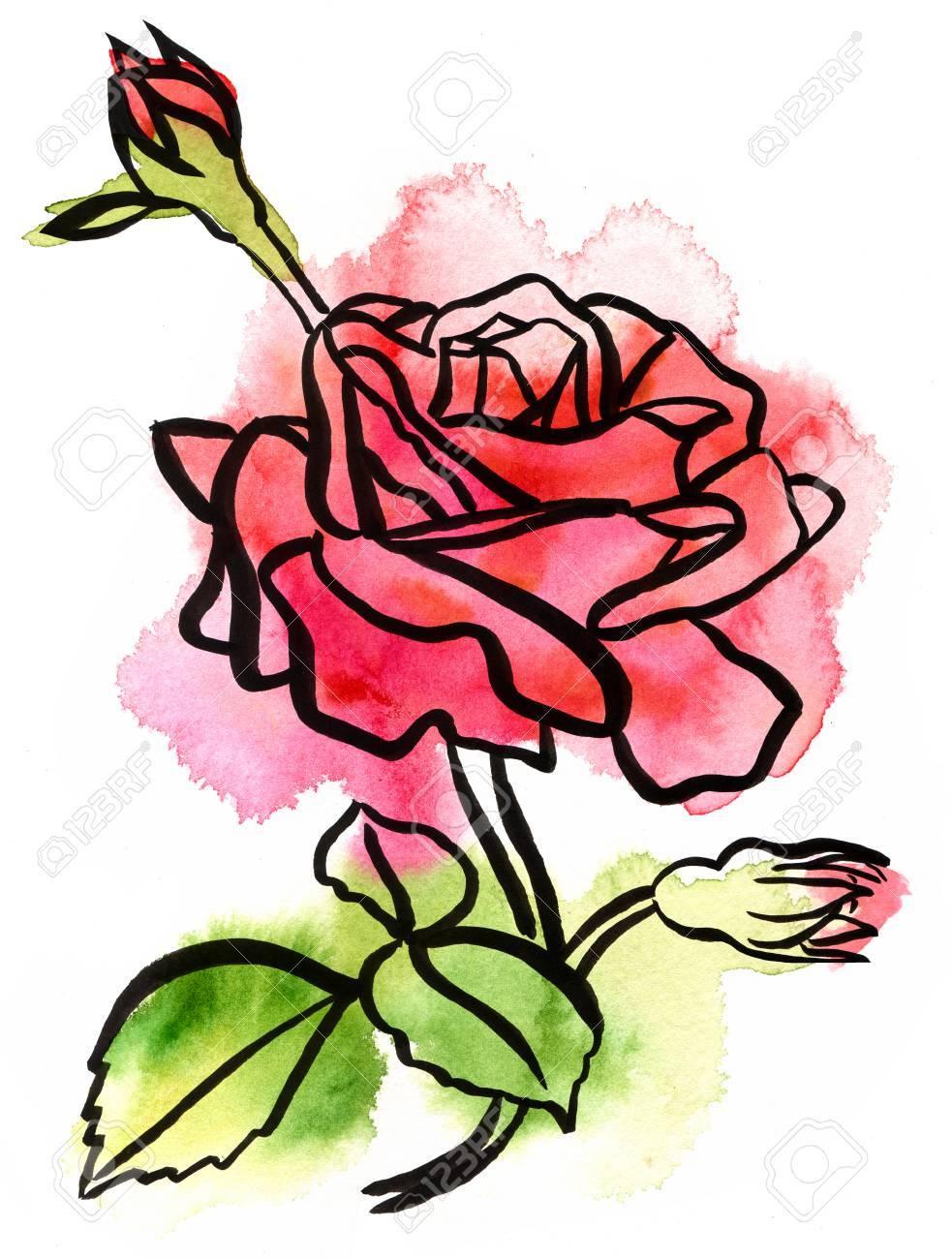 Un Dessin A L Encre Et A L Aquarelle A La Main D Une Branche De Rose