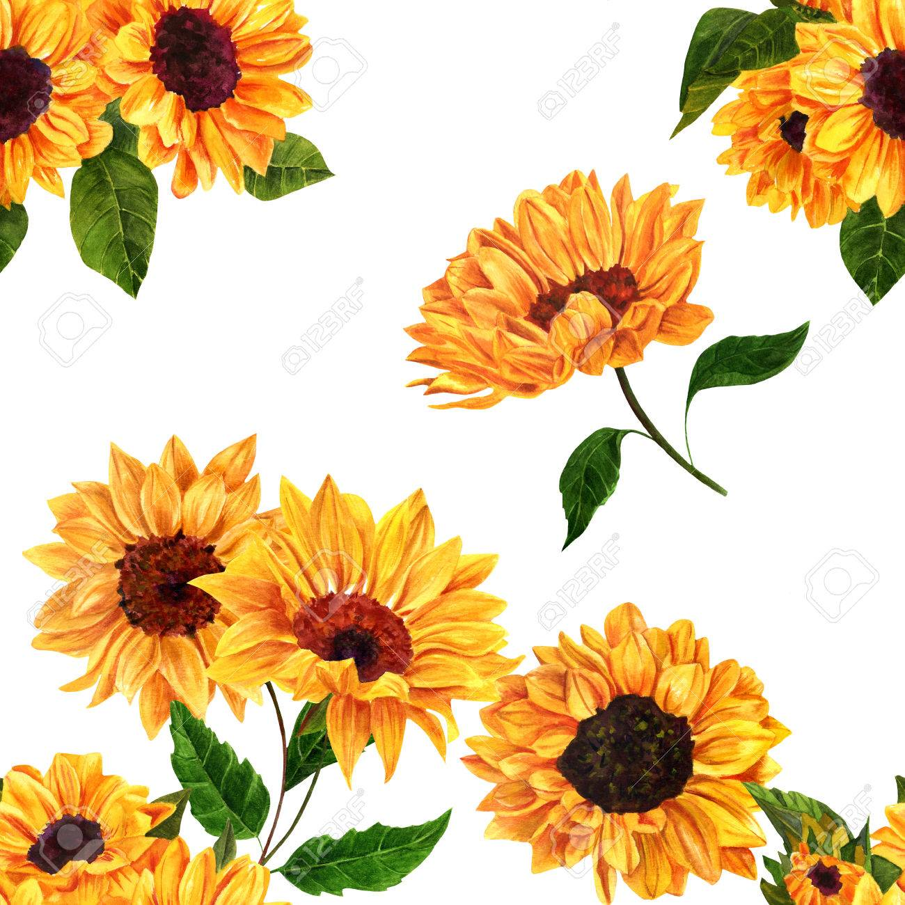 A seamless pattern with hand drawn vibrant yellow watercolor sunflowers on white background, vintage style floral repeat print - 63699793