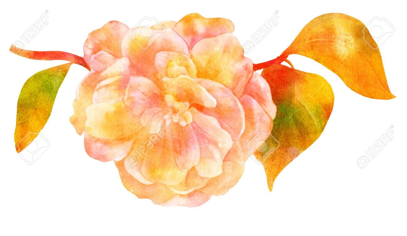 Dessin Aquarelle De Fleur De Camelia En Fleur Dore Banque D Images