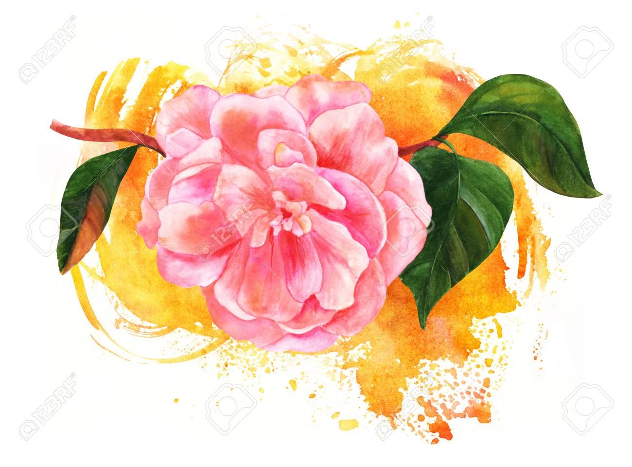 Aquarelle Dessin De Fleur De Camelia Rose Sur Un Pinceau En Or