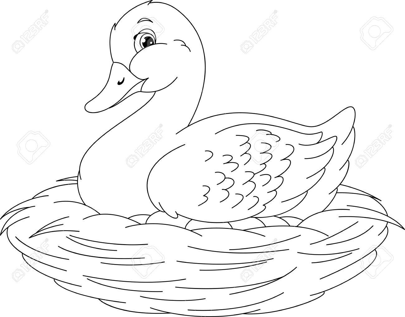 Duck Coloring Page Royalty Free Cliparts, Vectors, And Stock ...