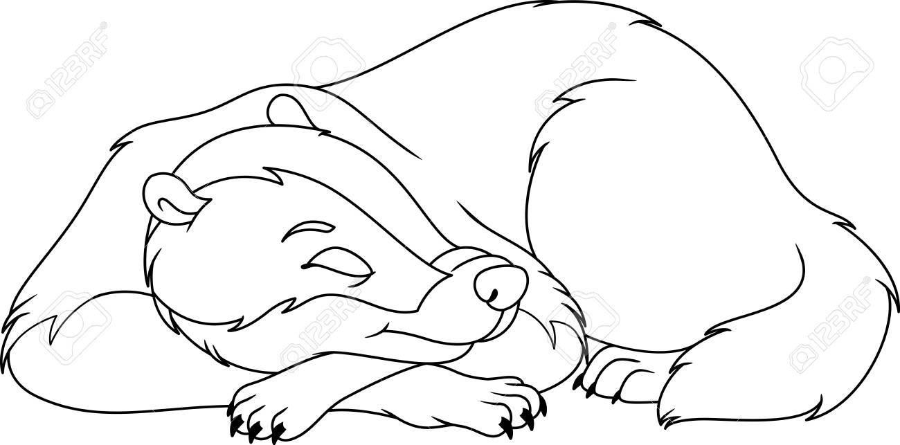 Dibujo Para Dormir De Tejón Para Colorear Ilustraciones Vectoriales