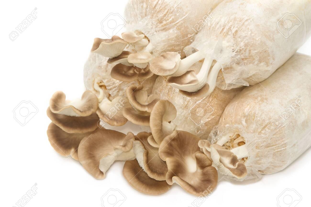 Mushroom Cultivation, Fresh Oyster Mushrooms growing in soil