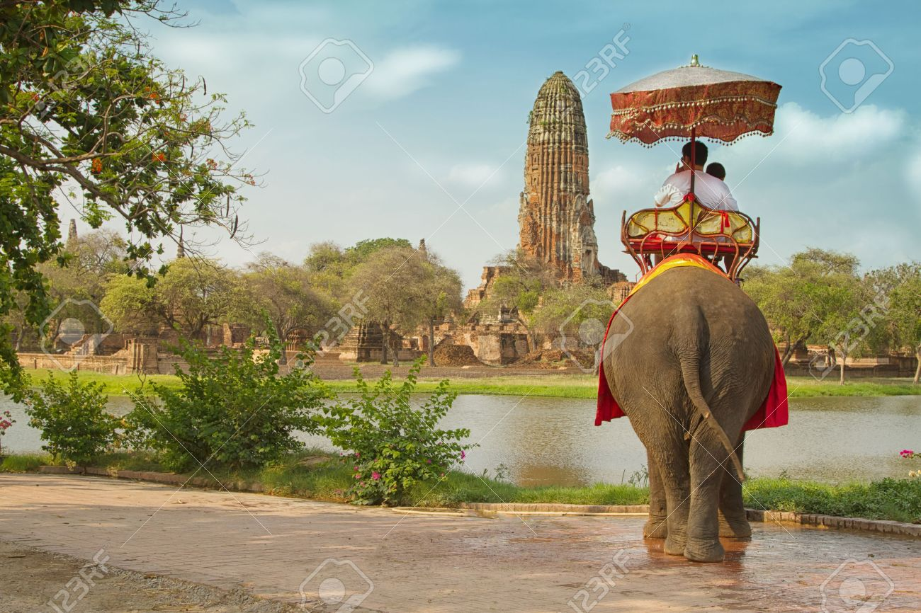 thai elephant stock photos royalty free thai elephant images and