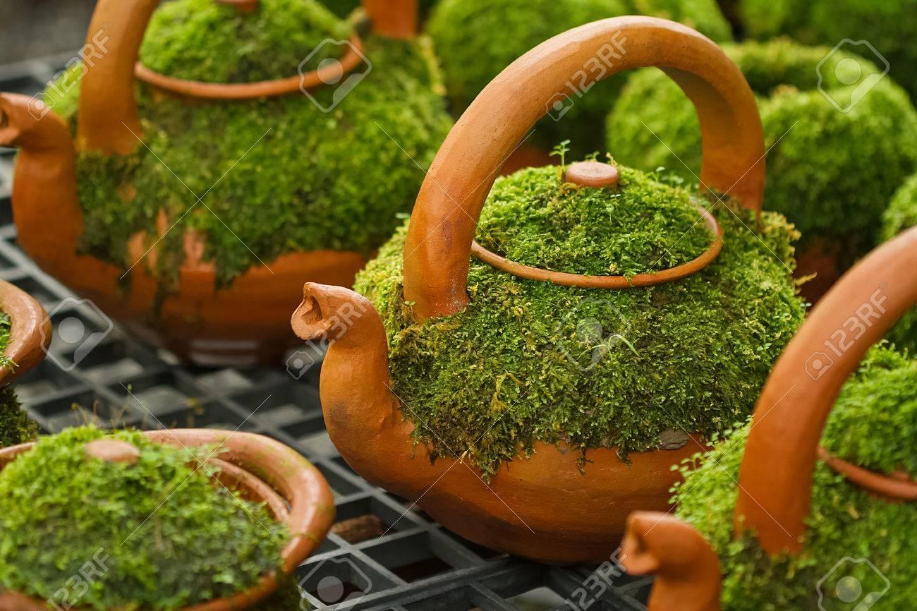 Couverture De Mousse Sur Le Pot D Argile Pour La Decoration Du Jardin