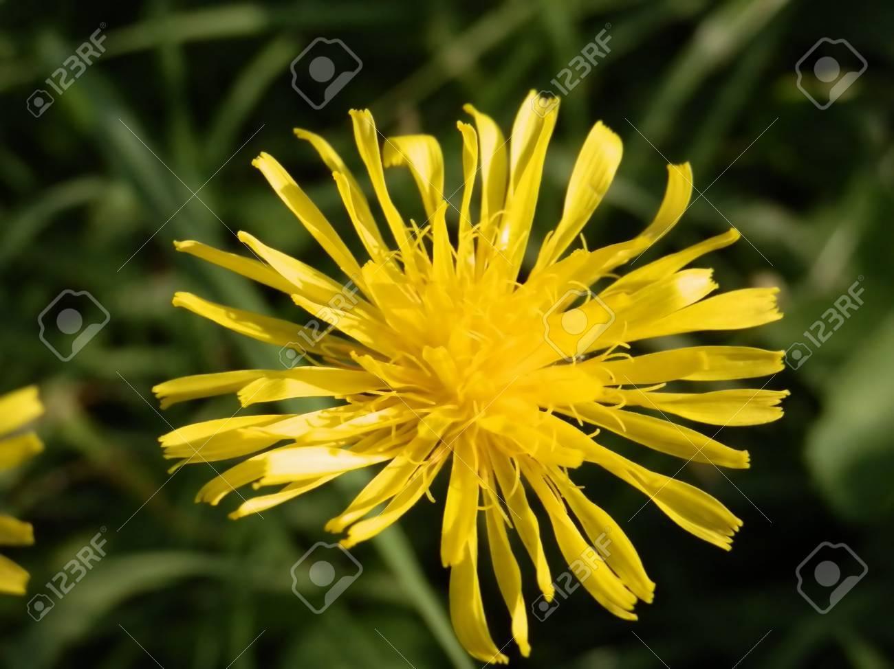 yellow flower Stock Photo - 15984522