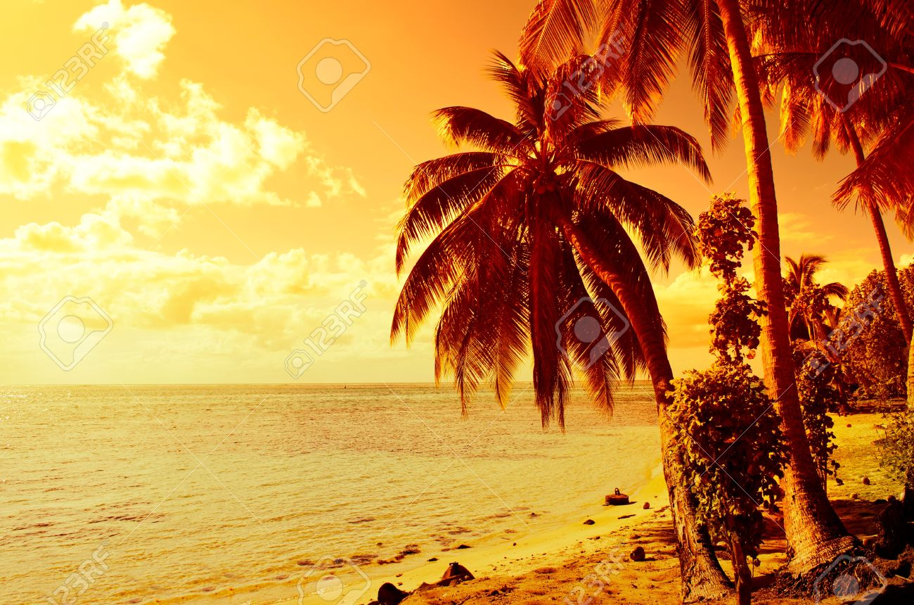 Tropical Sunset At A Beach With Coconut Palm Tree On Moorea An Island Near