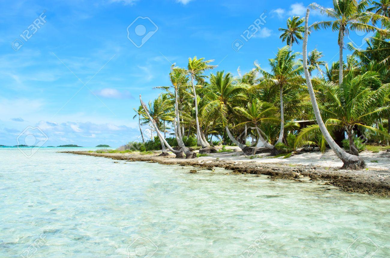 Coconut Palms On The Beach Of A Desert Island Near Tahiti In Stock