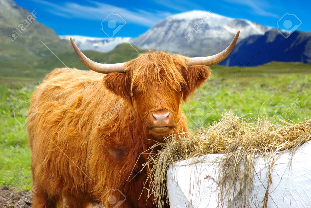 Yak on the background of the picturesque mountain landscape Stock Photo - 13040611