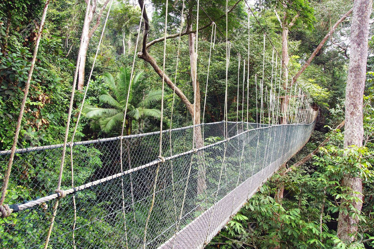 Canopy walk in Taman Negara National Park Malaysia Stock Photo - 26777227 & Canopy Walk In Taman Negara National Park Malaysia Stock Photo ...