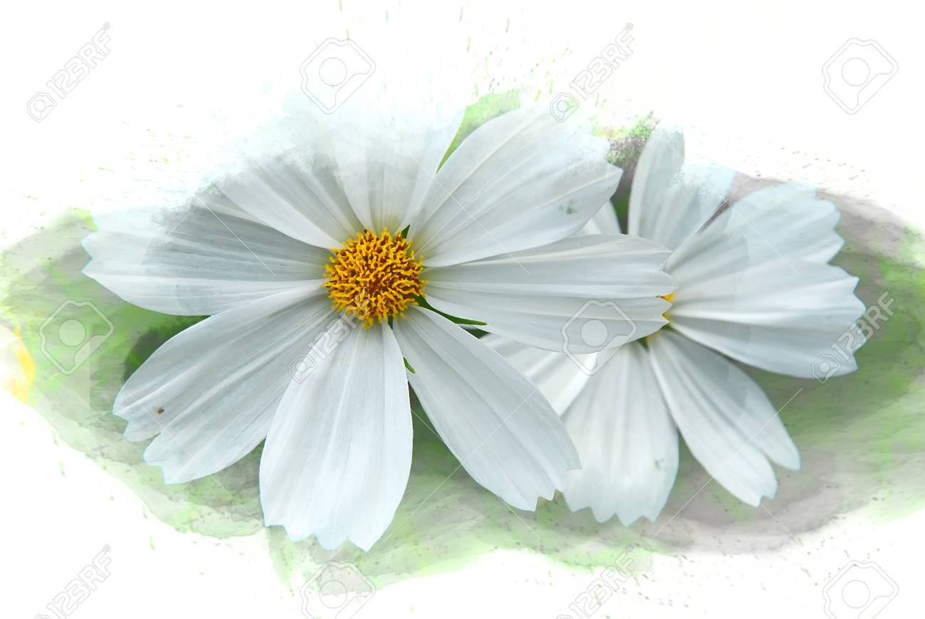 Abstract White Flower Blooming On Colorful Watercolor Painting