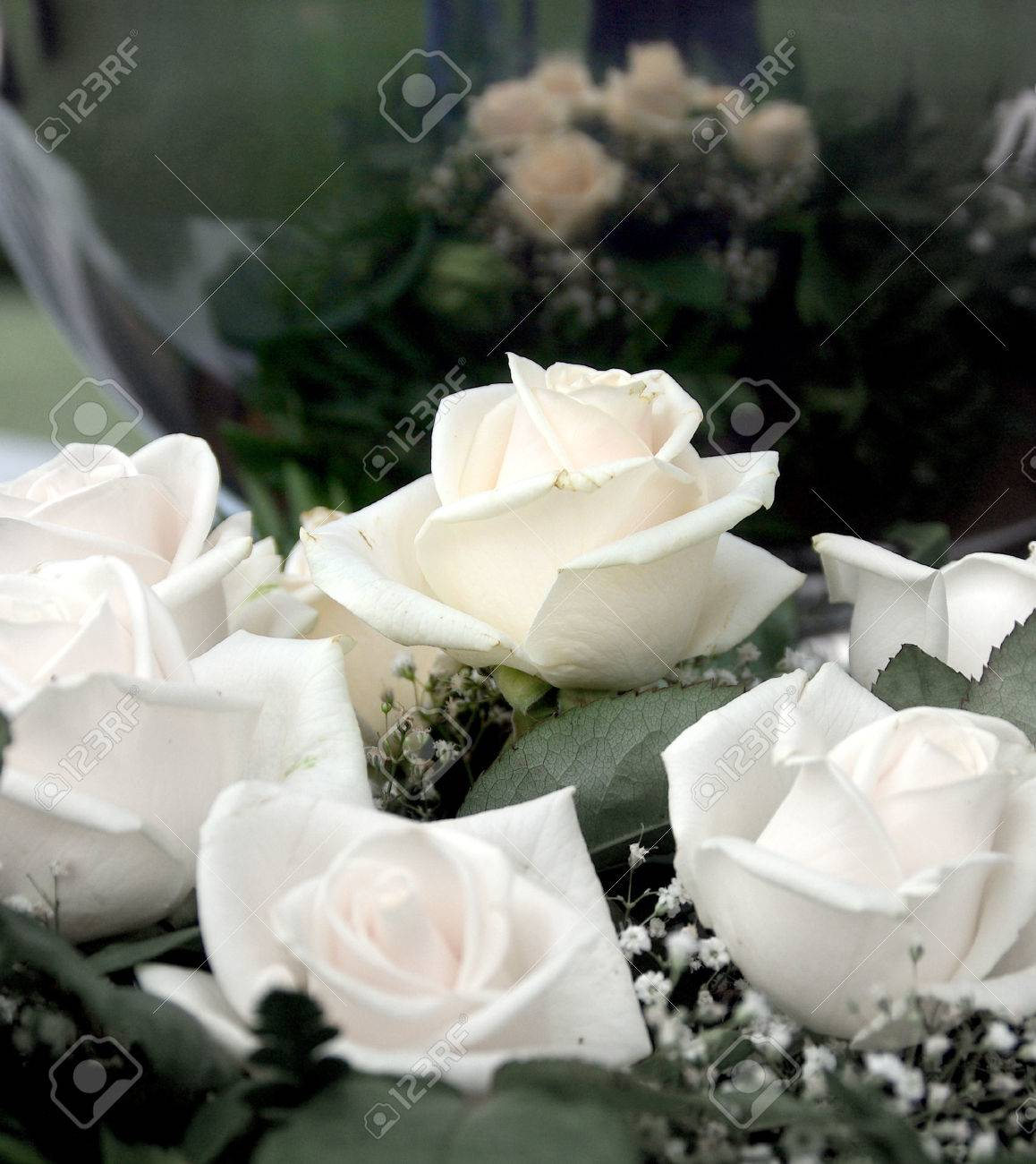 White roses symbol of the purity of love donated for the feast white roses symbol of the purity of love donated for the feast of love buycottarizona Choice Image