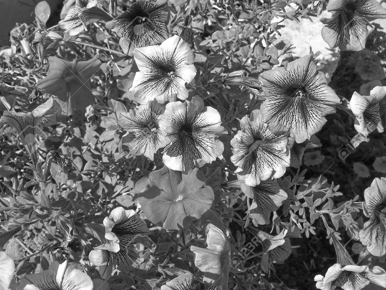 Nature black and white photo aspect beautiful detail stock photo 64933099