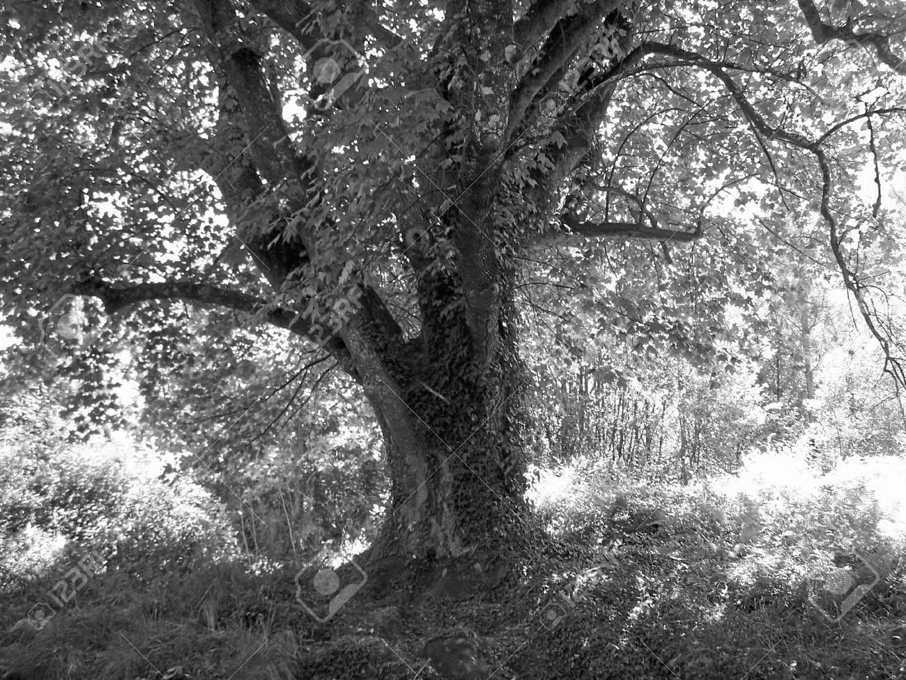 Nature black and white photo aspect beautiful detail stock photo 64935188